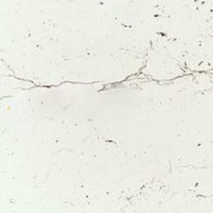Мрамор Марквина белый 3028/S